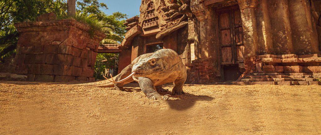 Bioparc-Fuengirola Leguan